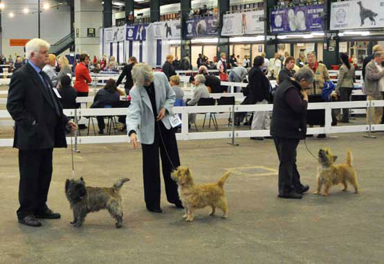 Cairn Terrier Zalazar UnZipped At Starveren