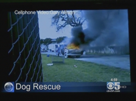 show-dogs-get-trapped-in-burning-san-jose-van.png