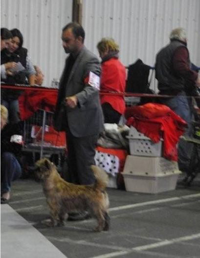 Zalazar Cairn Terrier